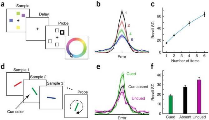 Ma et al. 2014 (adapted from Gorgoraptis et al. 2011): Evidence against slot working memory model